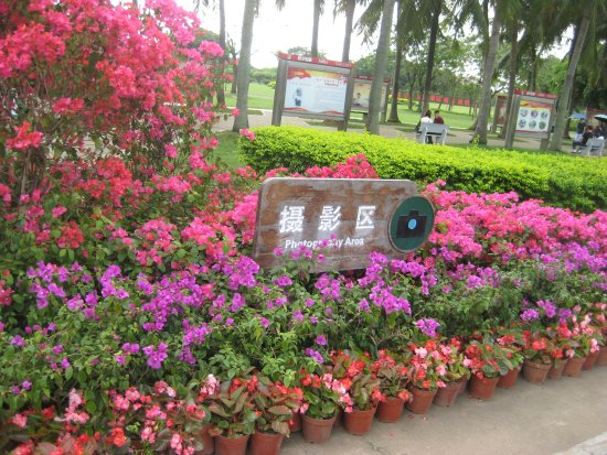 Haikou, China: Flowers in the park