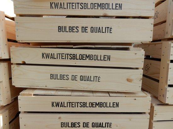 Groot-Bijgaarden, Belgio: High quality flower bulbs