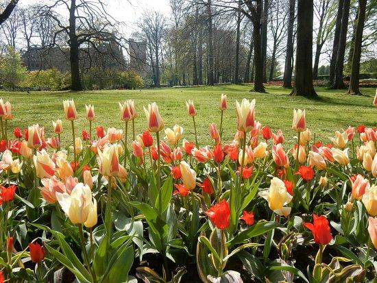 Groot-Bijgaarden, Belgio: tulips