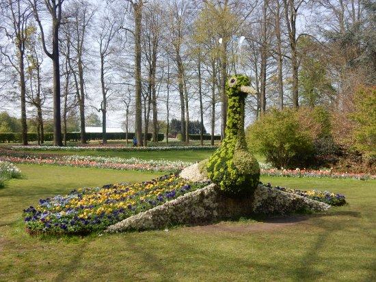 Groot-Bijgaarden, Belgio: a flower peacock