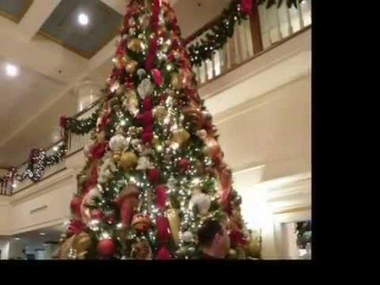 The Carolina Opry : One of the trees in the lobby