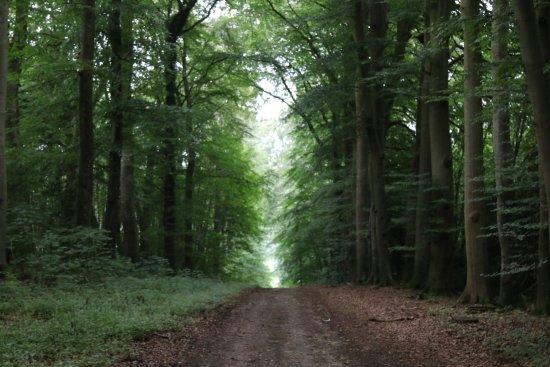 Saint Saens, Francia: Forêt parcours