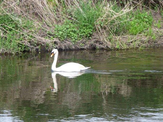 Croxall Lakes