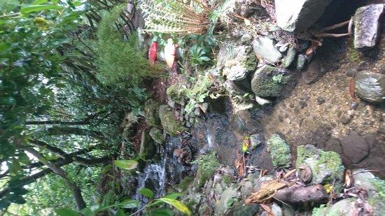 Belvedere House Gardens & Park: Grounds