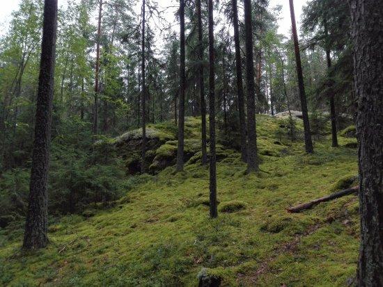 Kouvola, Finlandiya: ландшафт