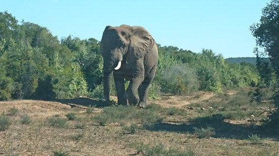 Addo Elephant National Park, Sudáfrica: DSC_0203_large.jpg