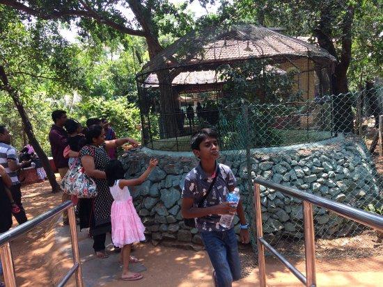 Guindy Snake Park: photo0.jpg