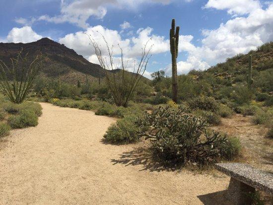 Mesa, AZ: photo0.jpg