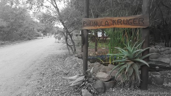 Marloth Park, Sudáfrica: Road in front of Lodge