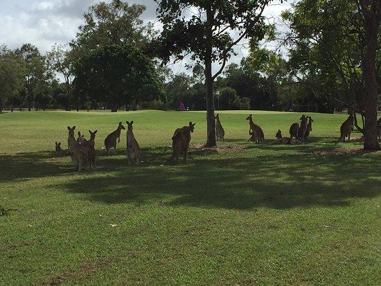 Mareeba, Australia: photo4.jpg