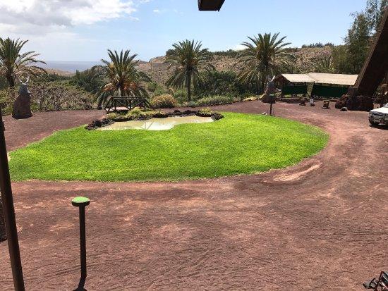 autruche - Picture of Oasis Park Fuerteventura, Fuerteventura - TripAdvisor