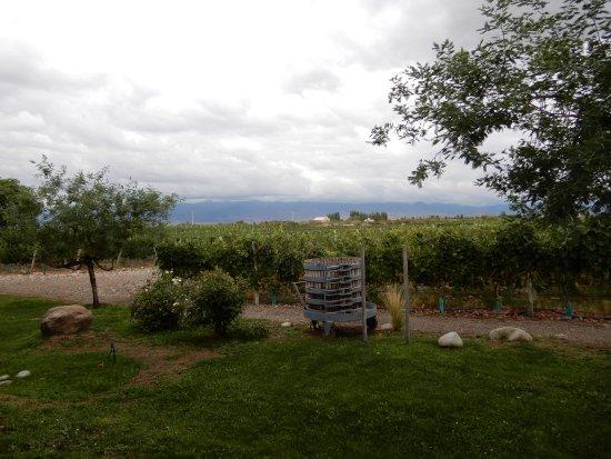 Tunuyan, Argentina: Vineyards