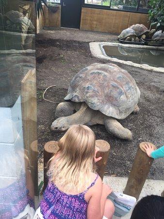 Auckland Zoo : photo1.jpg