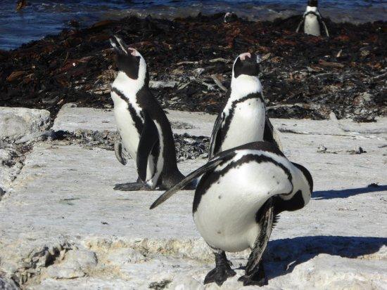 Plettenberg Bay, Sudáfrica: That close