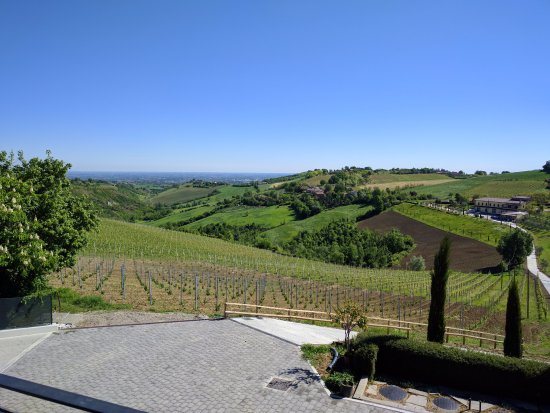 Marano sul Panaro, Italy: Vineyard view