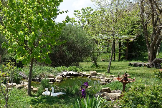 Bed and Breakfast Le Ginestre: Ententeich
