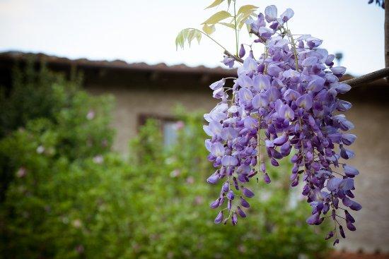 Foto de Castelfranco di Sopra