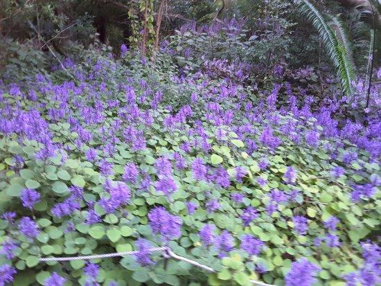 Kirstenbosch National Botanical Garden: A blanket of colour