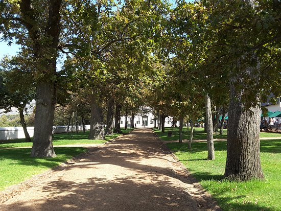 Constantia, Sudafrica: The tree lined driveway