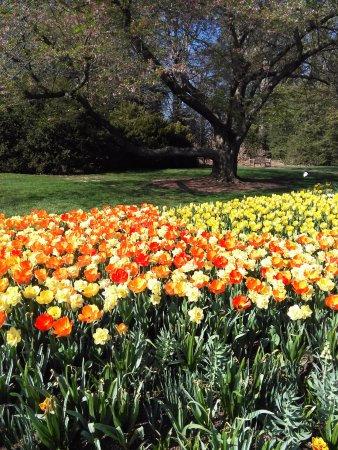 Kennett Square, Pensilvania: The tulips were absolutely beautiful and so many different varieties and colors.