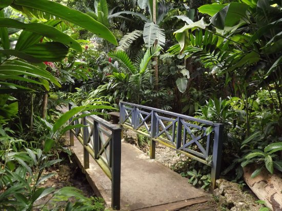 Coyaba River Garden and Museum: A short trail displays bridges and a variety of plants and trees at every turn.