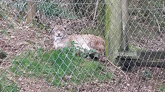 Galloway Wildlife Conservation Park: 20170419_125655_large.jpg