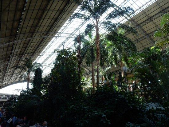 Jardin tropical int rieur gare picture of estacion de atocha madrid tripadvisor - Jardin tropical atocha ...