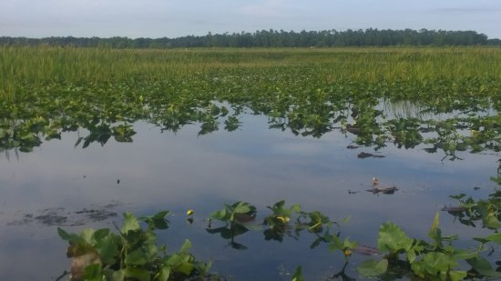 كيسمي, فلوريدا: Lake
