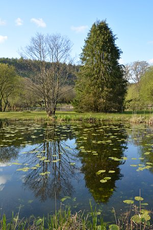 Llanllawddog, UK: Next Door Forest Lake