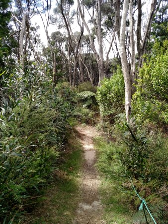 Awanui, Nouvelle-Zélande : Walking in the bush was easily done with the path markers.