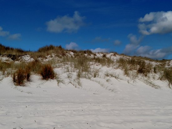 Kaitaia, New Zealand: Dune below the parking lot.