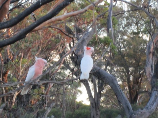 Waikerie, Australia: excellent bird watching