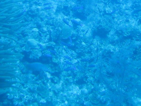 Τζορτζ Τάουν, Γκραντ Κέιμαν: School of blue fish
