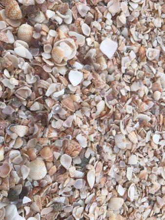 Shell Beach: photo1.jpg