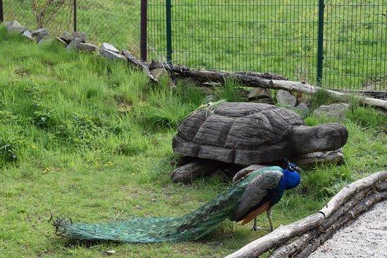 Senftenberg, Alemania: Schildkröte