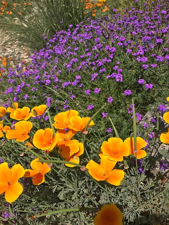 Arcadia, CA: Los Angeles County Arboretum & Botanic Garden