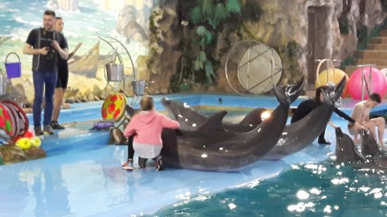 Kharkov Dolphinarium: 20170414_190205_large.jpg