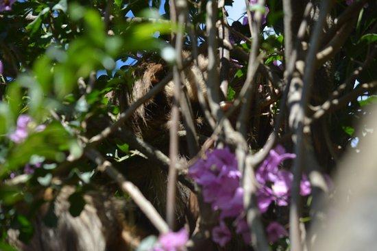 Hotel Claro de Luna: Das Faultier im Garten des Hotels