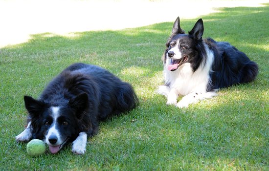 Malvern Manor Country Guest House: We love the dogs Dante and Jazz