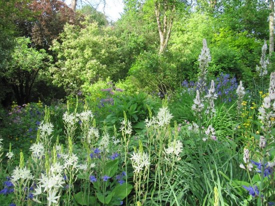 Bromyard, UK: The large herbaceous bed in late spring.