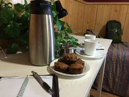 Uranium City, Kanada: Muffins from fresh wild berries !