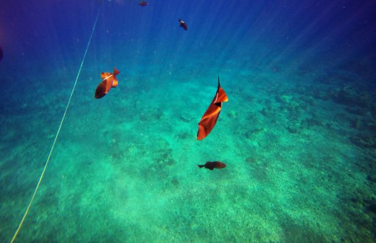 Wailuku, HI: Colorful Fish
