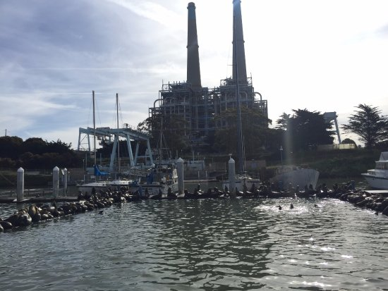 Moss Landing, CA: LOTS of sea lions on the dock with the towers in the back