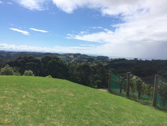 Waiheke Adası, Yeni Zelanda: photo4.jpg