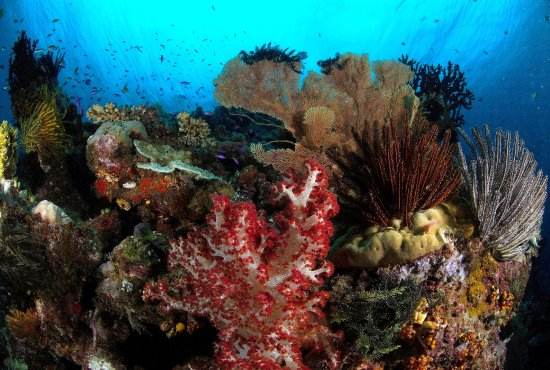 New Britain Island, Papua New Guinea: Pristine East New Britain Reef System.