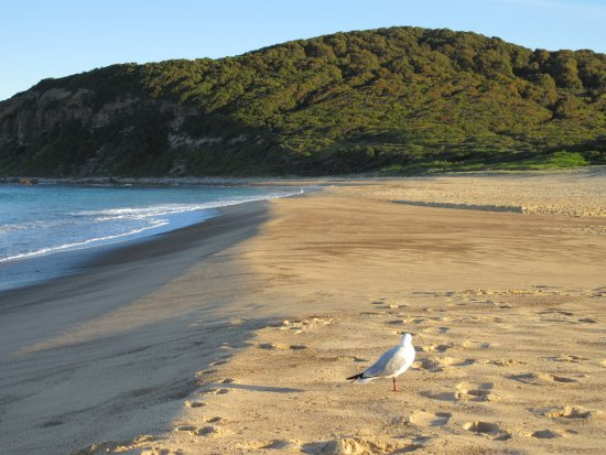 นิวคาสเซิล, ออสเตรเลีย: Beach