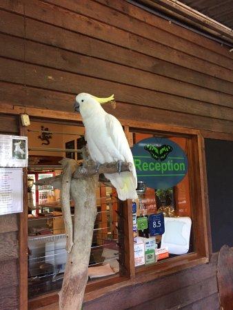 Lync-Haven Rainforest Retreat, Cabins, Camping & Wildlife Experience: photo5.jpg
