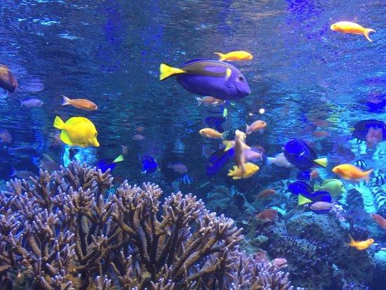 photo7.jpg - Picture of Toba Aquarium, Toba - TripAdvisor