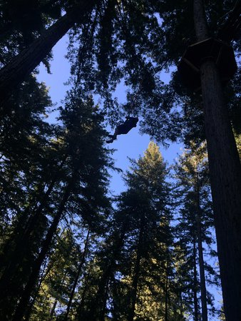 Mount Hermon, CA: The end of the Sequoia Adventure - you step off that platform and free-fall
