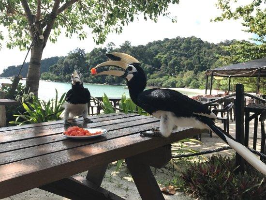 Pulau Pangkor, Maleisië: photo1.jpg